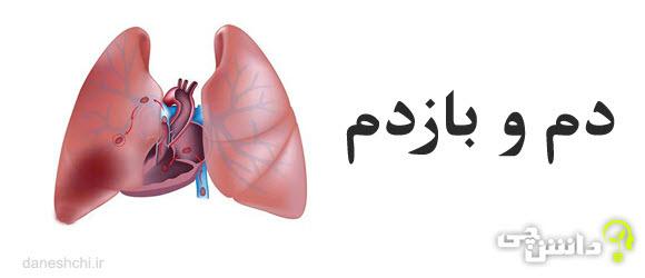 تحقیق تنفس ، دم و باز دم
