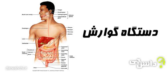 سیستم دستگاه گوارش انسان