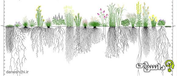 تحقیق درمورد ریشه