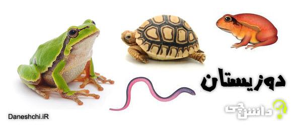 جانوران دوزیست ، تحقیق درباره دوزیستان