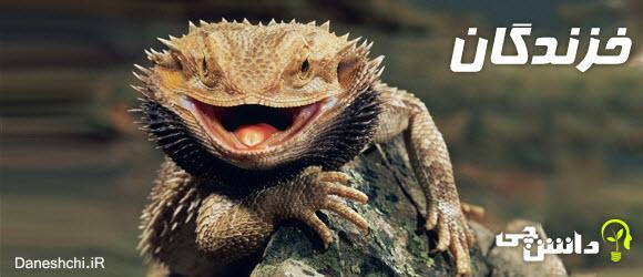 تحقیق خزندگان و زندگی حیوانات خزنده ,Reptiles