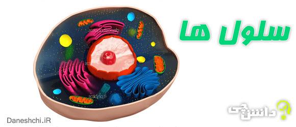 سلول و سازمان بندی آن cell