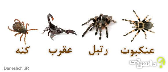 عنکبوتیان | عنکبوت ، رتیل ، عقرب و کنه