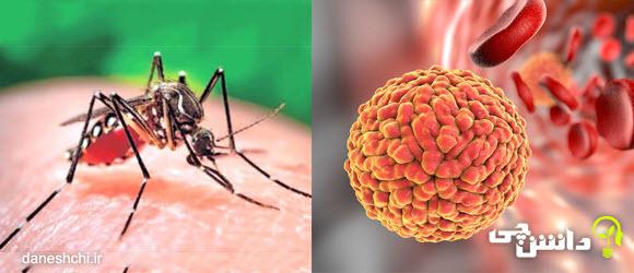 تحقیق در مورد ویروس زیکا
